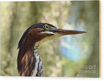 Wood Print featuring the photograph Little Green Heron Portrait by Kathy Baccari