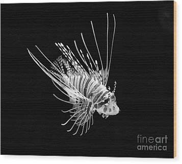 Little Lionfish Wood Print by Jamie Pham