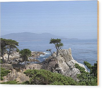 Lone Cypress Wood Print by Bev Conover