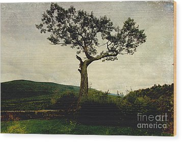 Wood Print featuring the photograph Lonely Tree by Trina  Ansel