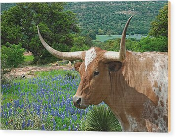 Longhorn Blue Wood Print by Robert Anschutz