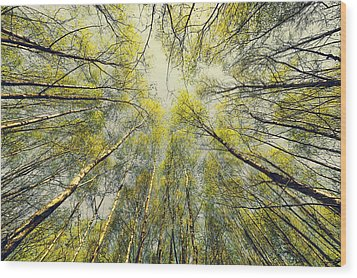 Looking Up Wood Print by Svetlana Sewell