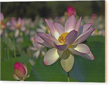 Wood Print featuring the photograph Lotus Flower by Jerry Gammon