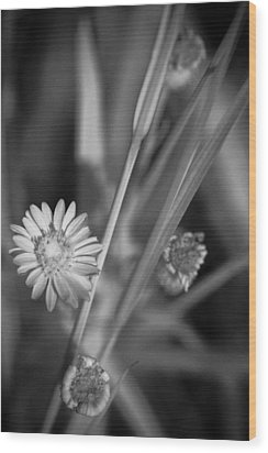 Wood Print featuring the photograph Loxahatchee Flower by Bradley R Youngberg