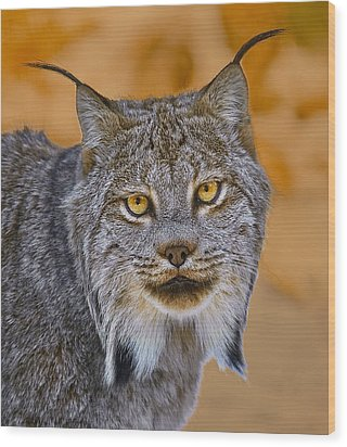 Wood Print featuring the photograph Lynx by Steve Zimic