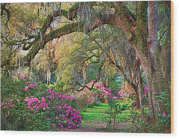 Magnolia Plantation Azaleas Wood Print