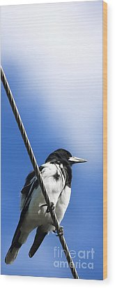 Magpie Up High Wood Print by Jorgo Photography - Wall Art Gallery