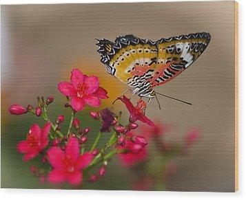 Malay Lacewing Butterfly  Wood Print by Saija  Lehtonen