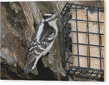 Male Hairy Woodpecker Wood Print by Linda Freshwaters Arndt