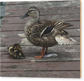 Mama Duck And Ducklings Wood Print by Pamela Walton