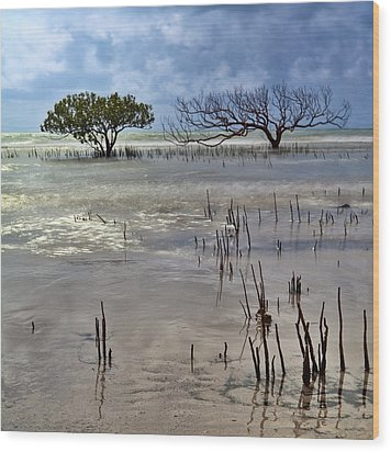 Mangrove Tree In Blurred Sea Wood Print by Dirk Ercken