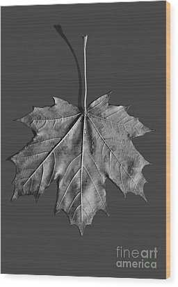 Maple Leaf Wood Print by Steven Ralser