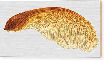Maple Seed Pod Wood Print