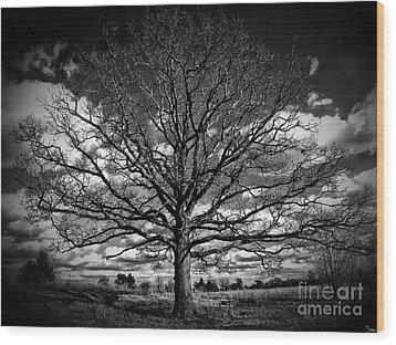 Marion Oaks Wood Print