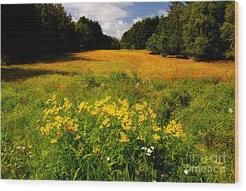 Meadow Filled With Yellow Flowers Wood Print