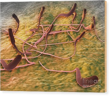 Microscopic View Of Sperm Wood Print by Stocktrek Images