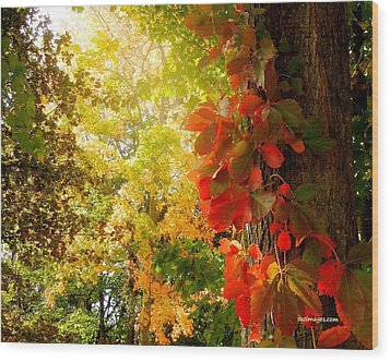 Minnesota Jungle Wood Print