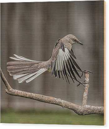 Mockingbird  Wood Print by Rick Barnard