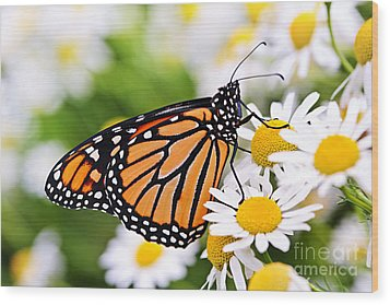 Monarch Butterfly Wood Print by Elena Elisseeva