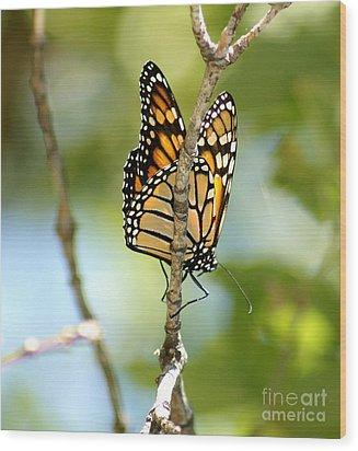 Monarch Wood Print by Lori Tordsen