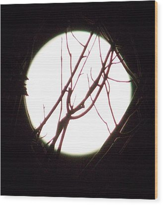 Moonshine 5 Wood Print
