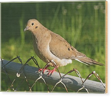 Morning Dove I Wood Print by Debbie Portwood