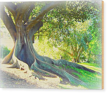 Morton Bay Fig Tree Wood Print by Leanne Seymour