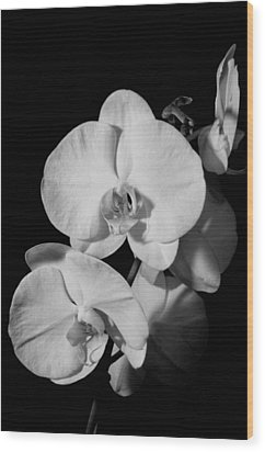 Moth Orchid Bw Wood Print by Ron White