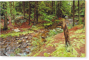 Mountain Stream With Hemlock Tree Stump Wood Print by A Gurmankin
