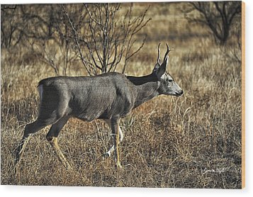 Mule Deer Buck Wood Print by Karen Slagle