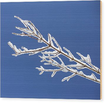 Winter's Icing Wood Print by Diannah Lynch