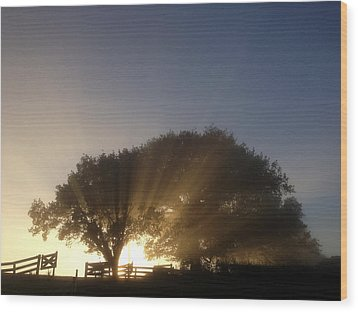 New Beginning Wood Print by Les Cunliffe