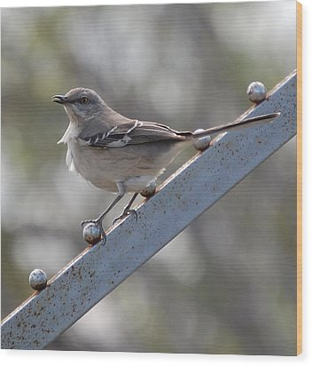 Wood Print featuring the photograph Northern Mockingbird 2 by Leticia Latocki