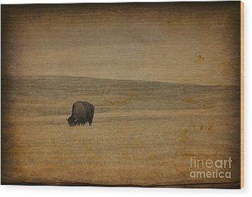 Western Themed South Dakota Bison  Wood Print