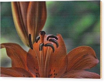 Orange Lilly  Wood Print by Saija  Lehtonen