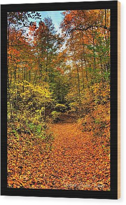 Wood Print featuring the photograph Orange Path by Michaela Preston