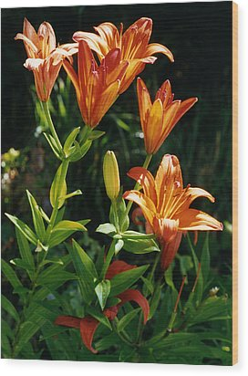 Orange Tiger Lilies Wood Print