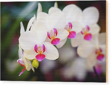 Orchid Beauty Wood Print by Tammy Smith