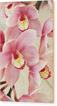 Orchids Wood Print by Carlos Caetano