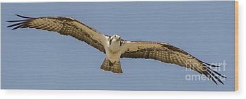 Wood Print featuring the photograph Osprey In Flight by Dale Powell