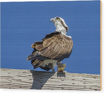 Wood Print featuring the photograph Osprey With Fish In Talons by Dale Powell