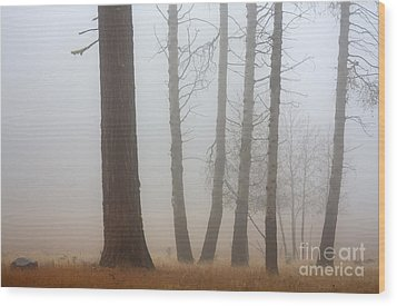 Out Of The Fog Wood Print by Mike  Dawson