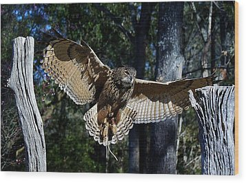 Owl In Flight Wood Print by Paulette Thomas