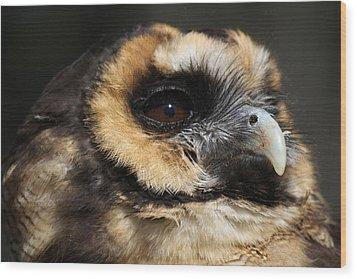 Owl Wood Print by Paulette Thomas