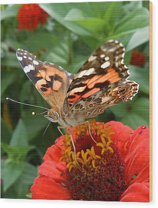 Painted Lady Butterfly  Wood Print by Diannah Lynch