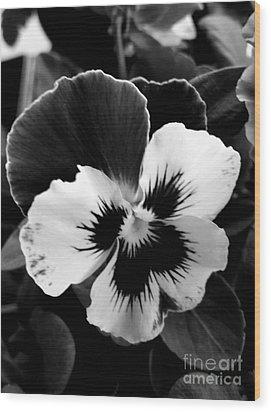 Pansies Wood Print by Rose Wang