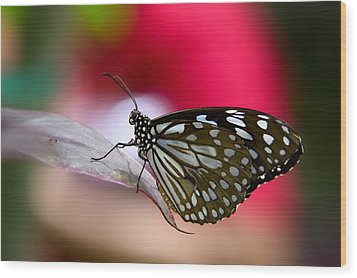 Paper Kite Butterfly  Wood Print by Saija  Lehtonen
