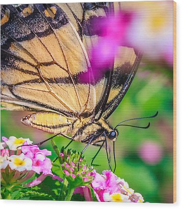 Wood Print featuring the photograph Papilio Glaucus by Rob Sellers