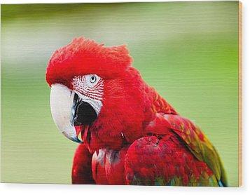 Parrot Wood Print by Sebastian Musial