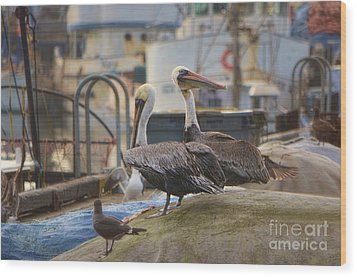 Pelican Duo Wood Print by Donna Greene